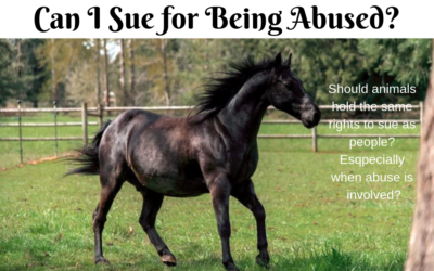 Shadow the Horse Seeks Justice for Himself